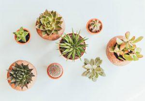 benefits_of_indoor_houseplants